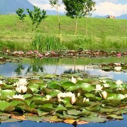 Allarme al parco Bartesaghi: «Non gettate tartarughe e pesciolini rossi nei laghetti»