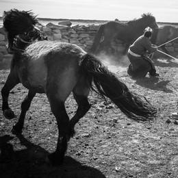 """""""Viaggi e avventure"""". Premiata la Mongolia di Beniamino Pisati"""