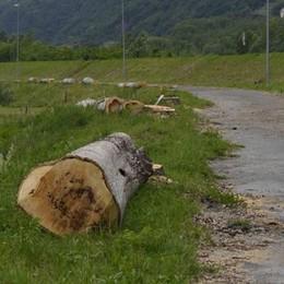 Terminato il taglio a Talamona: «In autunno sulla pista pianteranno frassini»