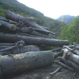 Tragedia nei boschi, aperta un'inchiesta
