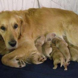 Cedrasco, un boccone avvelenato muore un cane, paura per i bimbi
