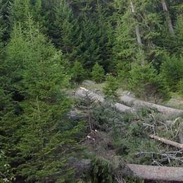 Consorzi forestali senza finanziamenti: rischio occupazione