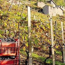 Il Sentiero del vino  fa il tutto esaurito  «Attenti al territorio»
