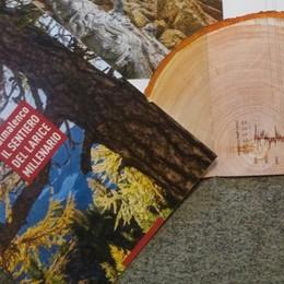 In Valmalenco un larice millenario  «È tra gli alberi più vecchi d'Europa»