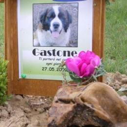 Prima agenzia funeraria per animali  «Difendiamo la dignità e il loro ricordo»