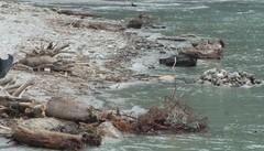 Il disastro del Cengalo in Regione  «Nessuna morìa nel lago di Como»