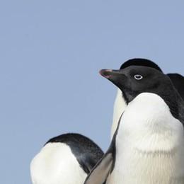 Pinguini, anfibi e ghepardi in pericolo  Colpa del clima sempre più caldo