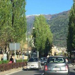 Piante mai sostituite «Adesso Viale Italia  sembra un colabrodo»