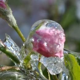 Danni da gelate, pioggia di richieste  per i risarcimenti