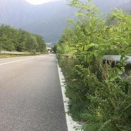 «Erbacce e arbusti a Prata, così si vanifica  il nostro lavoro»