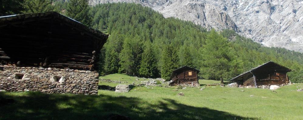 L'Imu sui fabbricati rurali  «Esenzioni per alpeggi e stalle»