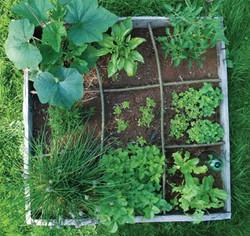 Un orto sul terrazzo idea per la primavera - Ambiente