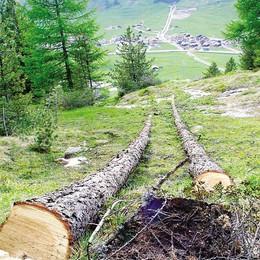 Quei boschi trascurati  Patrimonio da sfruttare
