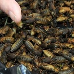 La carne fa male. E gli insetti?  Sì dell'Europarlamento al consumo