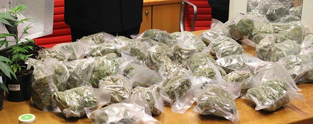 Droga: sequestrati 5 kg marijuana e un arresto