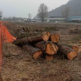 La nuova statale 38: si affacciano i lavori e spariscono le piante