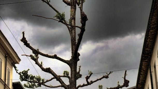 Maltempo, bufera di vento in Toscana