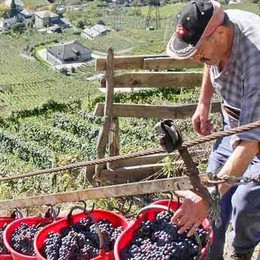 «Più l'uva è di qualità, più sarà pagata»