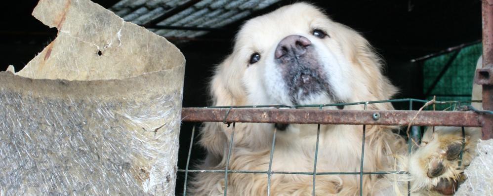 «Cane abbandonato, ora deve intervenire  l'amministrazione»
