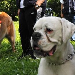 Famiglie  valtellinesi, un terzo ha un cane