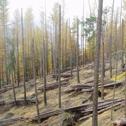 Incentivi alla filiera bosco-legno: dall'ente montano soldi a chi fa tagli