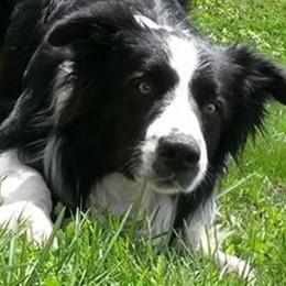 Il cane Taita ucciso a fucilate. È il terzo in Valle