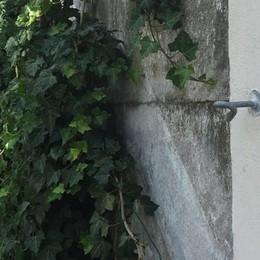 Furto allo stadio Toccalli  Rubati i tiracavi dalla siepe