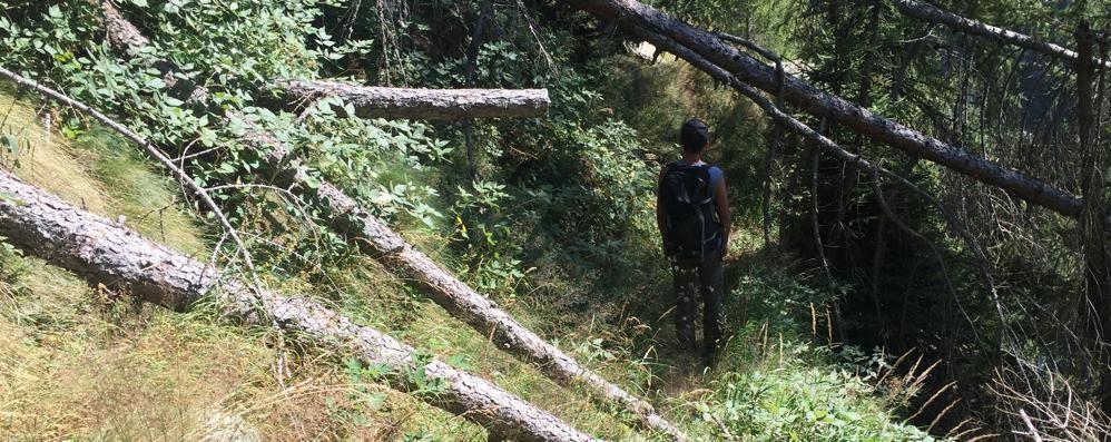 Sentieri ostruiti da tronchi e massi  Altro che turismo