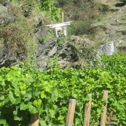 Droni e robot tra i filari e nei campi. La tecnologia aumenta il fatturato