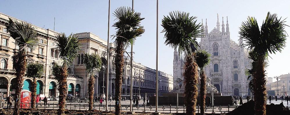 La palme comasche  fanno discutere i milanesi
