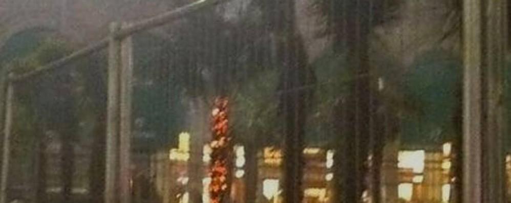 Milano, bruciate le palme  I vandali ripresi dalle telecamere