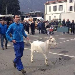 Pascolo unico per tutte le capre  «Così meno costi e più formaggio»