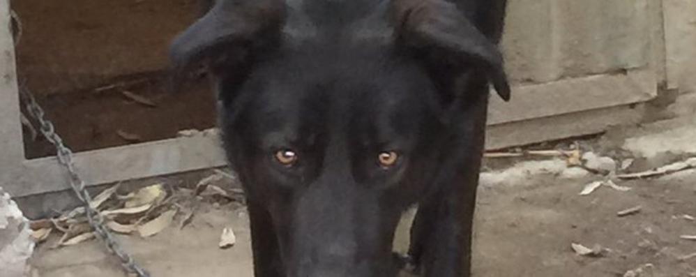 Il sindaco sul cane in custodia giudiziaria  «Autorità scavalcate»