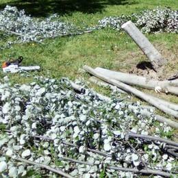 Sondrio, il vento lascia il segno al parco Bartesaghi