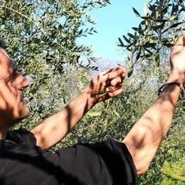 L'olio lecchese   tra i migliori in Italia
