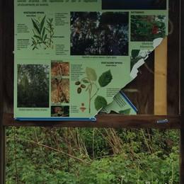 Bacheche rotte e piante divelte  Vandali sul Sentiero Valtellina
