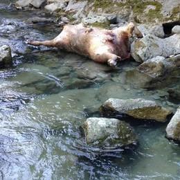 """Il """"lido"""" delle Cassandre, una carcassa nelle acque"""