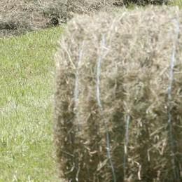 Foraggio in alta quota: «Il problema è serio, colpa della siccità»