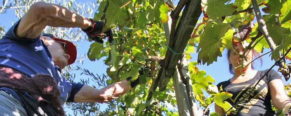 Prezzo delle uve: «La qualità va valorizzata»