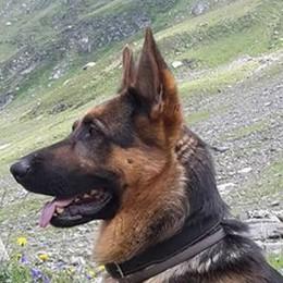 Il cane ucciso dalla trappola  «Non deve mai più succedere»