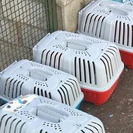 Gatti lasciati al freddo a Busteggia, rabbia dell'Enpa