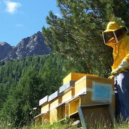 """Bio e miele """"baciati"""" dall'Interreg"""