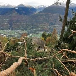 Bilancio pesante: «Sono migliaia gli alberi caduti»