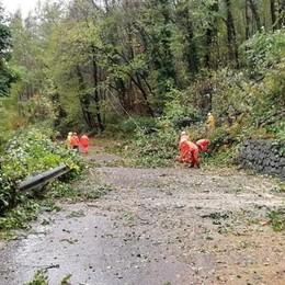 Valmalenco, dopo il caos è polemica sulla pulizia del bosco