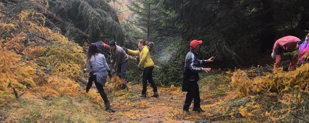 Alberi abbattuti: i volontari del Cai sono scesi in campo