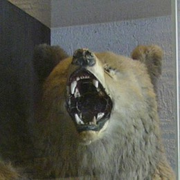 La caccia all'orso e la mano dell'uomo