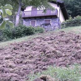 «Niente caccia ai cinghiali in Valtellina»