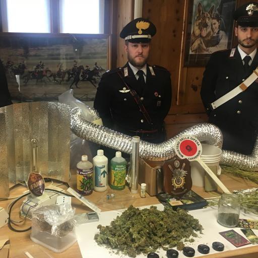 Coltivava cannabis: arrestato