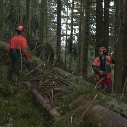 Filiera bosco-legno, troppi proprietari e pochi professionisti