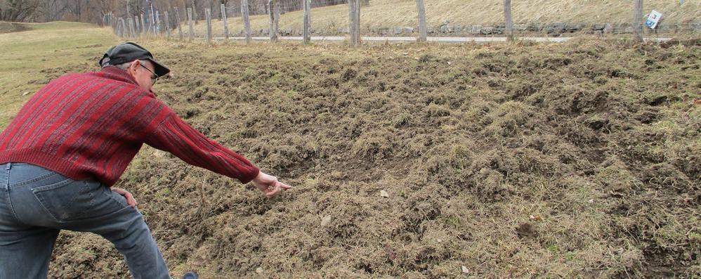 Troppi cinghiali , anche i contadini  potranno abbatterli